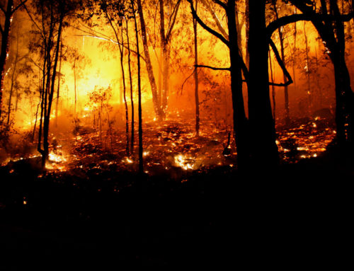 Wildfire Risk Reduction Webinar Thursday, March 7